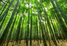 Aan serviesgoed van bamboe is meestal gemaakt van melamine kunststof waaraan bamboevezels zijn toegevoegd.. (Foto Pexels via Pixabay)