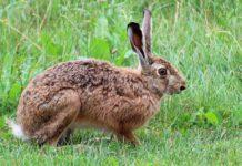 Einde aan jacht op haas en konijn