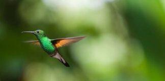 Wat de kolibrie ons kan leren