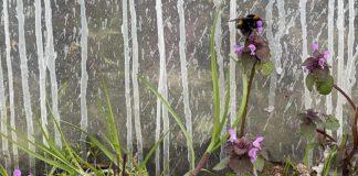 De hommels in onze moestuin zie je vooral op de witte en paarse dovenetel.