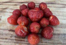 Ook merels vinden onze aardbeien niet te versmaden. (Foto Erik van Huizen)