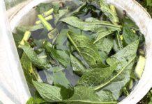 Een emmer voor driekwart gevuld met smeerwortel en wat water is alles wat je nodig hebt om een goede meststof voor je moestuin te kunnen maken. (Foto Erik van Huizen)